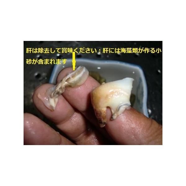ボイルマガキ貝殻付き4800g冷凍パック|deepseawartergm0|06