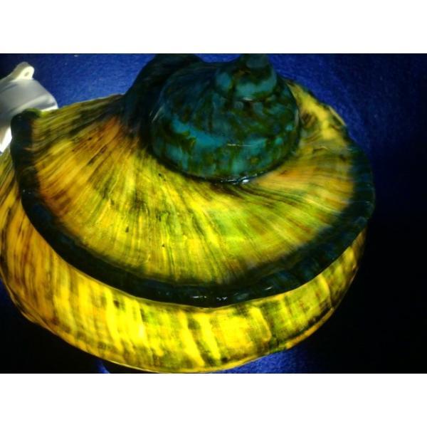 生表面磨き夜光貝殻大サイズ1012|deepseawartergm0|13