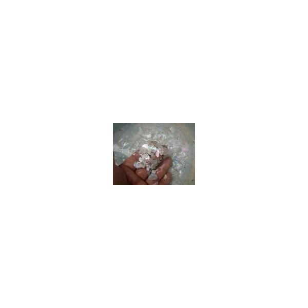 生表面磨き夜光貝殻大サイズ1012|deepseawartergm0|18