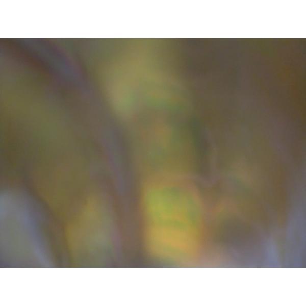 生表面磨き夜光貝殻大サイズ1012|deepseawartergm0|04