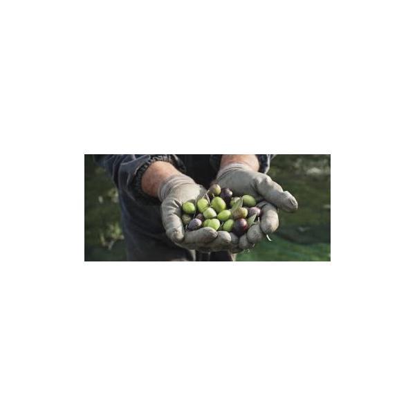 オリーブオイル エキストラバージン 375ml コールドプレス コブラムエステート ライトフレーバー オーストラリ deligo-store 04
