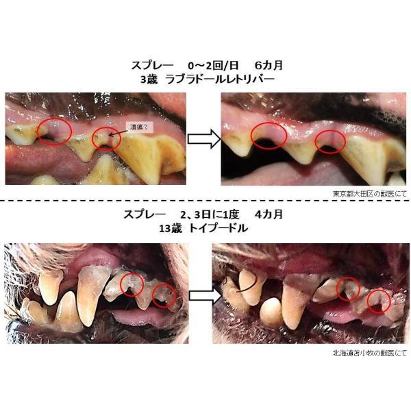 獣医師推奨 DENT@LEAR デンタリア ペット 口臭 口 歯磨き 口臭ケア 口腔ケア|dentalear|07