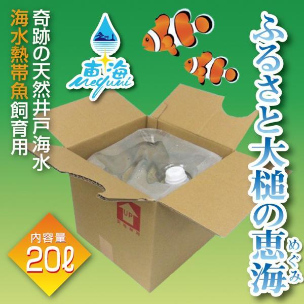 ふるさと大槌の恵海  20リットル|denzaemonya