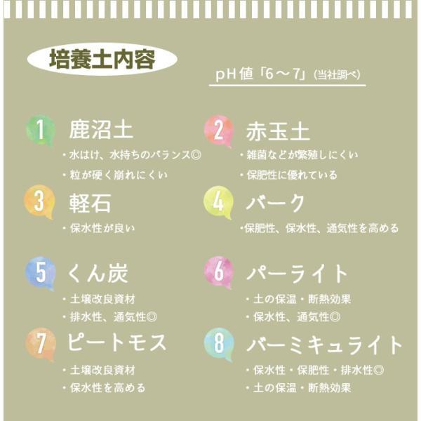 初めての方にもおすすめ!オリジナル商品【かんたん培養土】30L|doanosoto|06