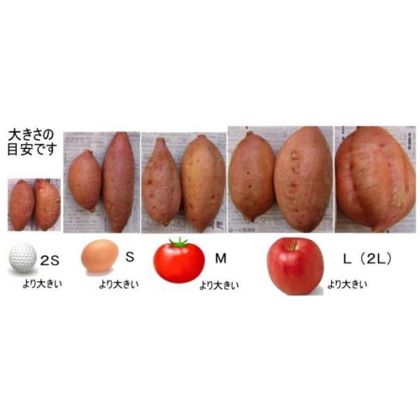 安納芋 紅 5kg サツマイモ 種子島産 SSミニサイズ/チビコロ 71〜125個 donga2 04