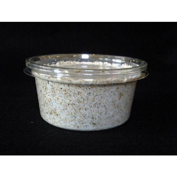  菌糸プリンカップ SRD−120ccカップ(クヌギ100%・二次発菌)