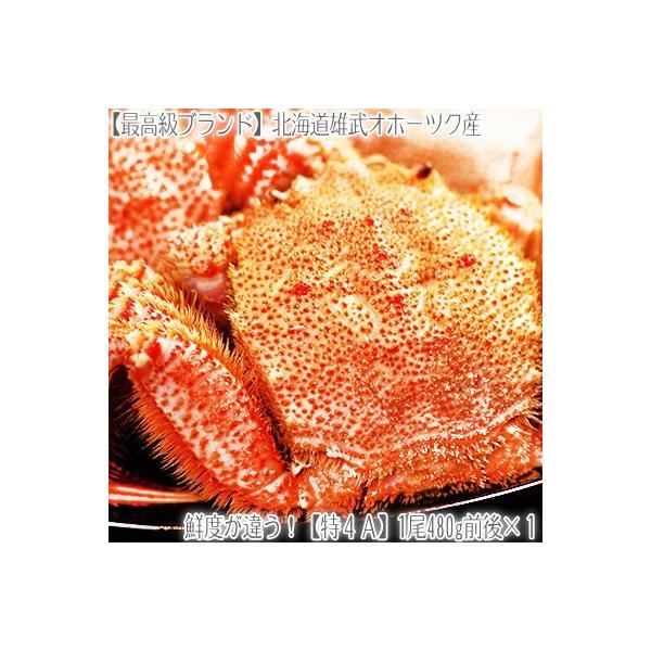 (毛ガニ 大型)北海道雄武産 480g前後×1尾(最高級 毛蟹 北海道産 濃厚 蟹味噌 ボイル済み お中元 お歳暮)