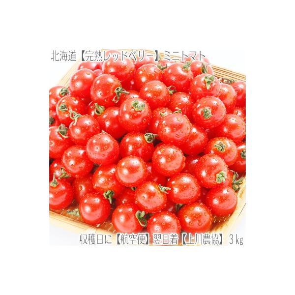 (送料無料 ミニ トマト 北海道産)JA上川 完熟レッドベリー 3kg箱(北海道 航空便 収穫日に空輸で翌日着 農園がサイズ、品種などを厳選 アイコ)