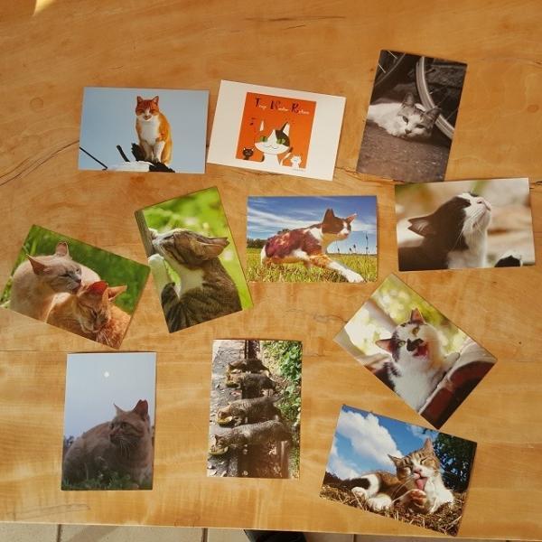 さくらねこポストカード(12枚セット)|doubutu-kikin|03