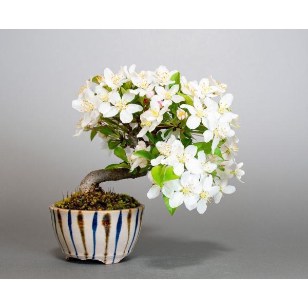 盆栽 ズミ盆栽 酢実(ずみ・酢実盆栽)小さな盆栽 4076|e-bonsai