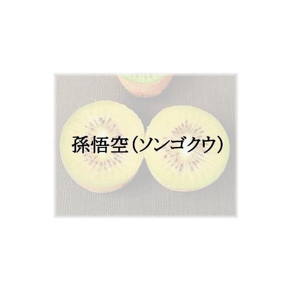キウイフルーツ 孫悟空(黄肉系専用雄木) 接木苗 1本