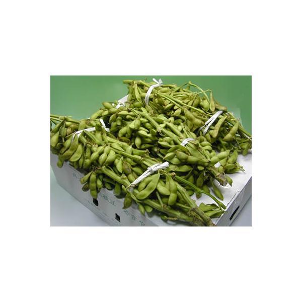 赤井さんの丹波黒豆枝豆「若さや」 約3kg|e-hanafusa