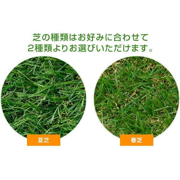 人工芝 芝生 ロール 1m×10m 芝生マット【あすつく】|e-kurashi|05