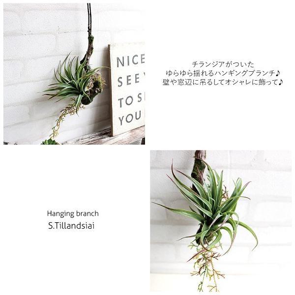 フェイクグリーン ハンギングブランチ S ランジア エアプランツ 多肉植物 造花 CT触媒|e-mintcafe|02