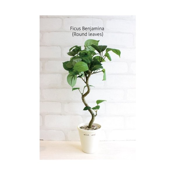 ミニ観葉植物 丸葉ベンジャミン 40cm 造花  フェイクグリーン 観葉植物 CT触媒|e-mintcafe