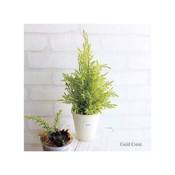 ゴールドクレスト白鉢 35cm  人工観葉植物 造花 インテリア フェイクグリーン CT触媒|e-mintcafe