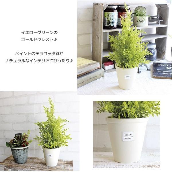 ゴールドクレスト白鉢 35cm  人工観葉植物 造花 インテリア フェイクグリーン CT触媒|e-mintcafe|02