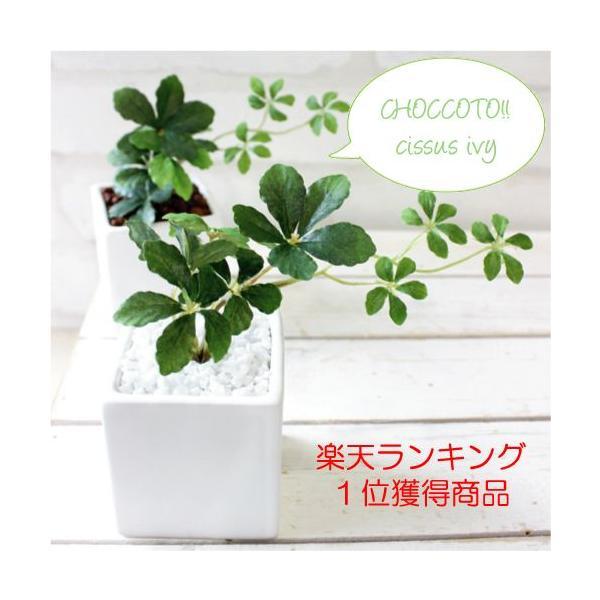 観葉植物 ミニシサスアイビープラント シュガーバイン 造花 インテリア フェイクグリーン|e-mintcafe