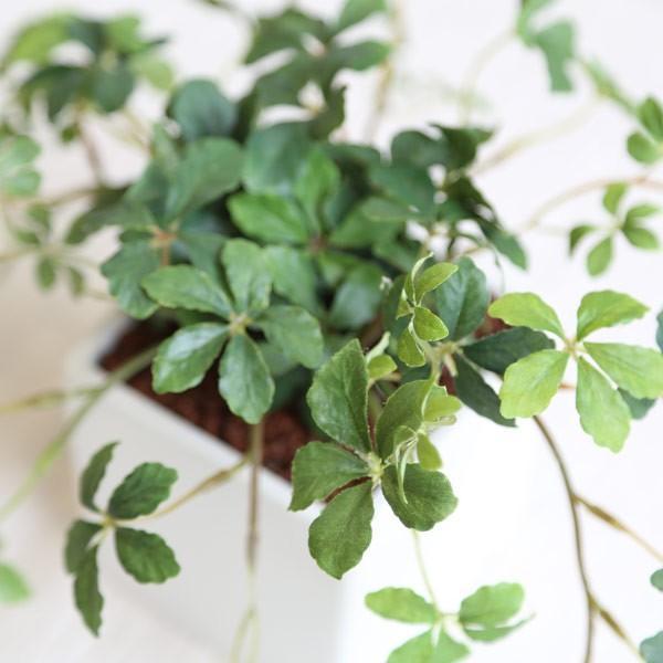 観葉植物 L.シサスアイビー シュガーバイン 造花 インテリア フェイクグリーン 高級 リアル おしゃれ 室内 ギフト 消臭 光触媒 CT触媒|e-mintcafe|02