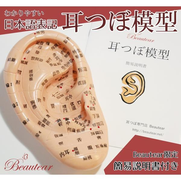 耳つぼ模型 日本語版 17cm 日本語表記 耳模型 耳介図 耳ツボ Beautear|ear-heartdrop