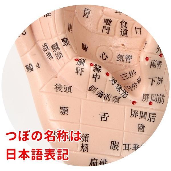 耳つぼ模型 日本語版 17cm 日本語表記 耳模型 耳介図 耳ツボ Beautear ear-heartdrop 05