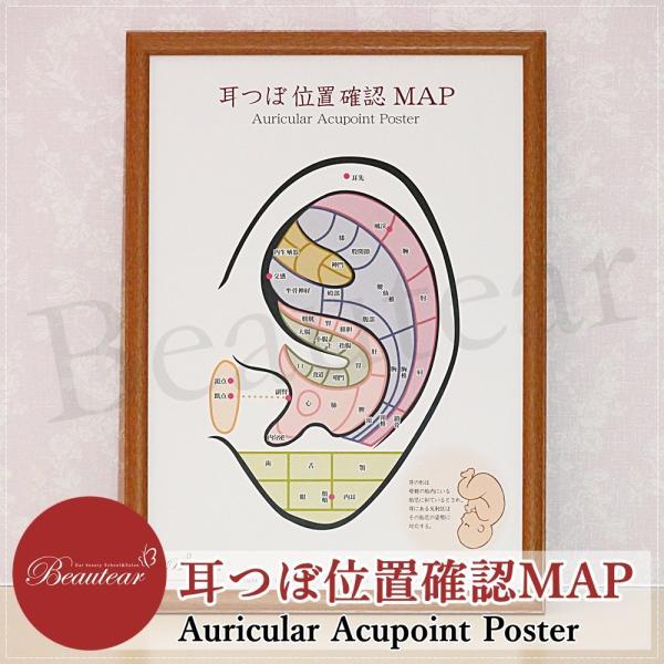 Beauter 耳つぼポスター 位置確認 初心者向け カラー ポスター 耳介図 区域分け 耳つぼジュエリー 耳ツボ|ear-heartdrop