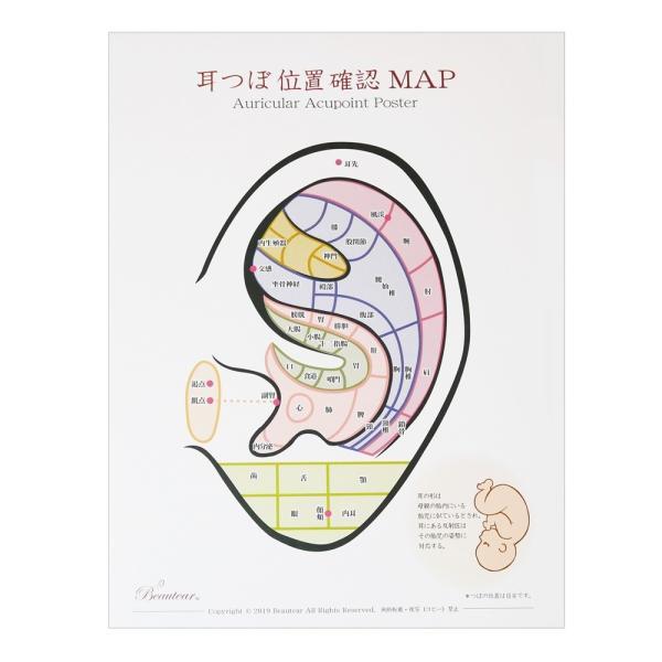 Beauter 耳つぼポスター 位置確認 初心者向け カラー ポスター 耳介図 区域分け 耳つぼジュエリー 耳ツボ|ear-heartdrop|04