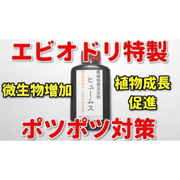 エビオドリ特製腐植物質添加剤ヒュームス(50ml×4本)レッドビーシュリンプシュリンプ飼育水質添加剤
