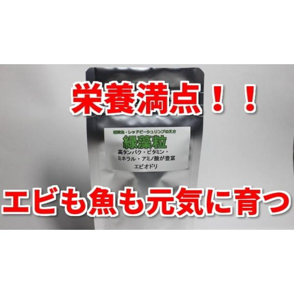 緑藻粒(シュリンプ・熱帯魚のエサ)エビオドリ製品レッドビーシュリンプベタメダカ