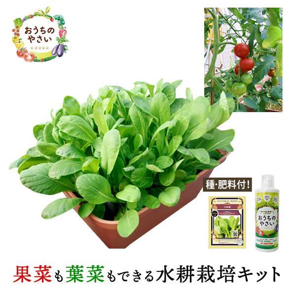 家庭菜園 プランター栽培セット 水耕栽培 おうちのやさい 菜園キット 種 肥料付 養液栽培