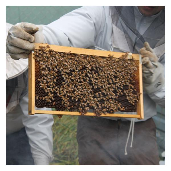 国産純粋蜂蜜 KAYAMA蜂蜜 130g 3本セット|ecolocle|02