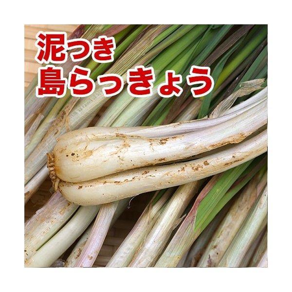 島らっきょう沖縄県産(100g) 量り売り♪500g以上購入で100gオマケ! いよいよ旬の島らっきょう!お試し 沖縄野菜 |島らっきょう | 生 国産 天ぷらや塩漬に!