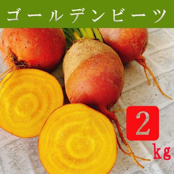 ゴールデンビーツ 2kg オーガニック 農薬無散布 酵素栽培 自社農場直送 大阪産