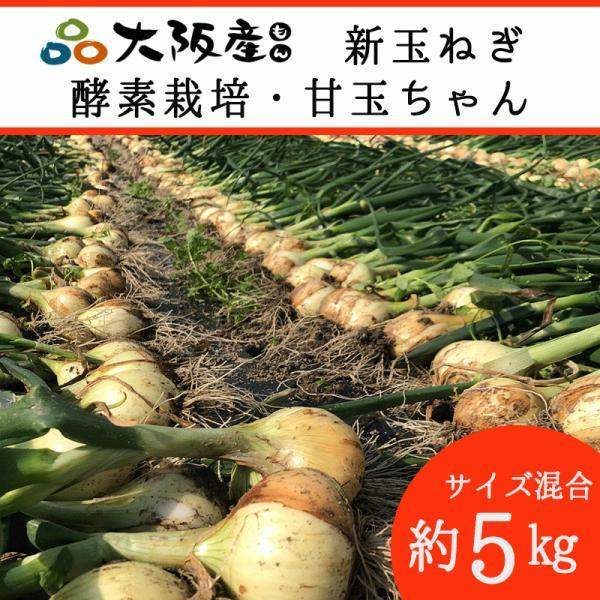 新玉ねぎ 甘玉 オーガニック 自社農場直送 玉ねぎ 農薬無散布 5kg (M・L混合) 送料無料