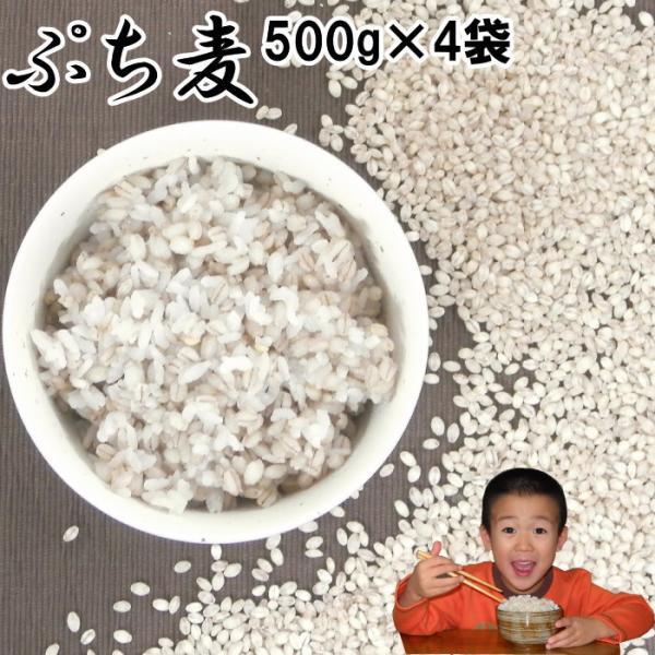 ぷち麦 500g×4袋 | 無農薬 大麦 福岡県産 筑後久保農園