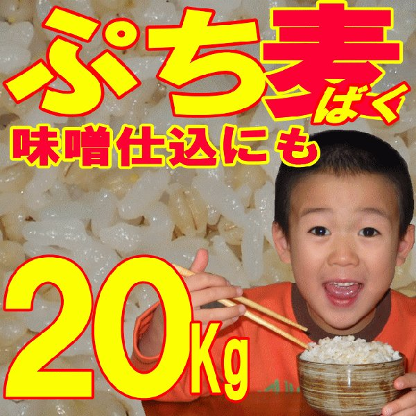 ぷち麦 20Kg | 無農薬 大麦 福岡県産 筑後久保農園