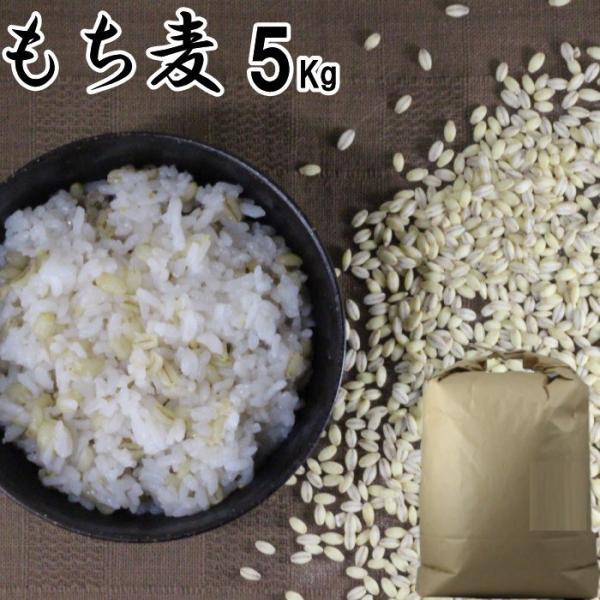 もち麦 5Kg | 大麦 くすもち二条 無農薬 筑後久保農園 福岡県産 国産