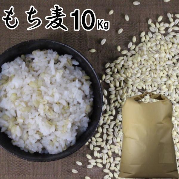 もち麦 10Kg | 大麦 くすもち二条 無農薬 筑後久保農園 福岡県産 国産