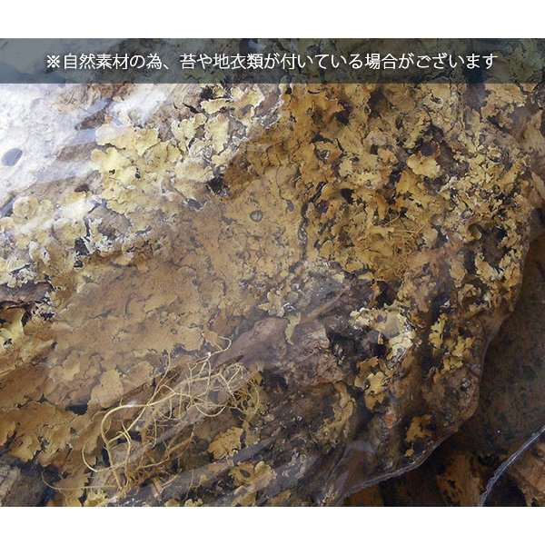 観葉植物/チランジア(エアプランツ)3株とバージンコルクディスプレイのセット|engei|10