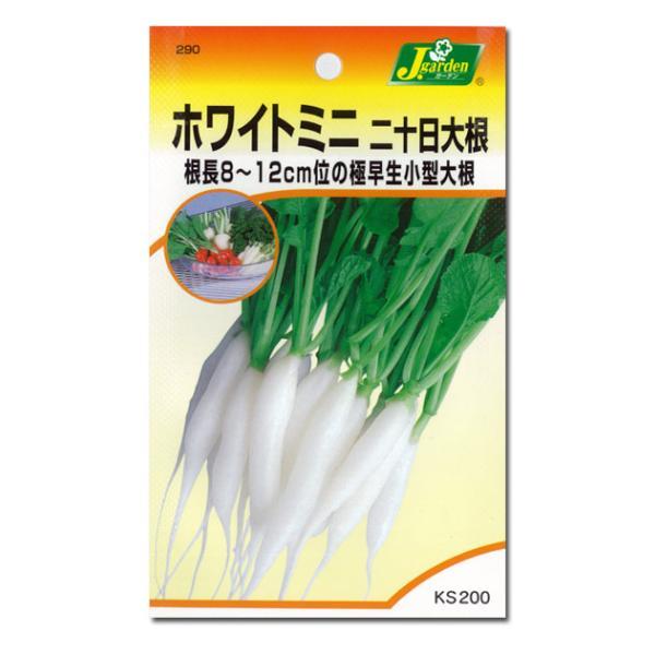 有効期限19年12月 二十日大根ホワイトミニ  野菜タネ|engei