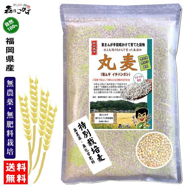 森のこかげ 丸麦 750g  無農薬 特別栽培