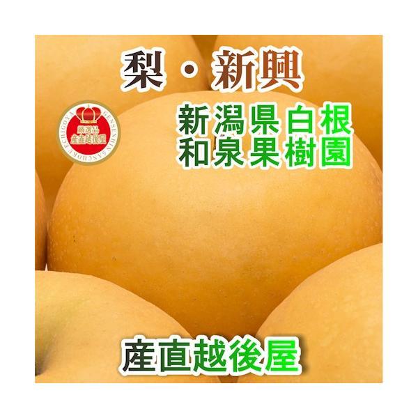 フルーツ 梨 和梨 新興 新潟県白根 梨栽培農家 和泉果樹園 有機質肥料栽培 新興梨 10kg (14個〜20個) 家庭用梨 送料無料