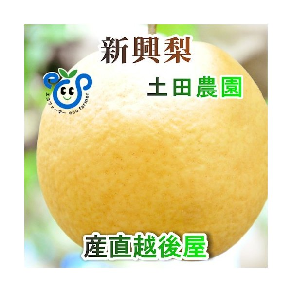 フルーツ 梨 和梨 新興 新潟県 エコファーマー認定農園 土田農園 有機栽培 新興梨 家庭用 3kg(4個〜6個)送料無料
