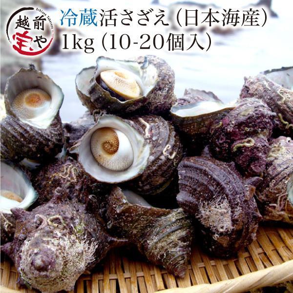 活 サザエ (さざえ 栄螺)  1.0kg セット 天然 海鮮BBQ バーベキュー ((冷蔵))