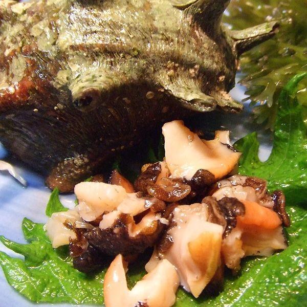 サザエ(1kg)新鮮・海の幸 活さざえ(お刺身・つぼ焼き)日本海で獲れた新鮮なサザエを活きたままお届けします[冷蔵]|etizenwakasa|03