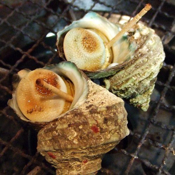 サザエ(1kg)新鮮・海の幸 活さざえ(お刺身・つぼ焼き)日本海で獲れた新鮮なサザエを活きたままお届けします[冷蔵]|etizenwakasa|04