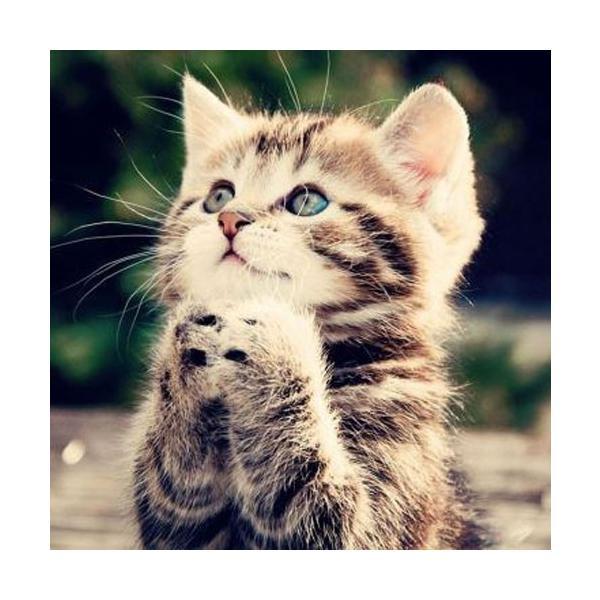 ネックレス レディース 猫 サファイア 9月の誕生石 天然石 可愛い にゃんこ ペンダント シルバー ギフト プレゼント|eureka1991|05