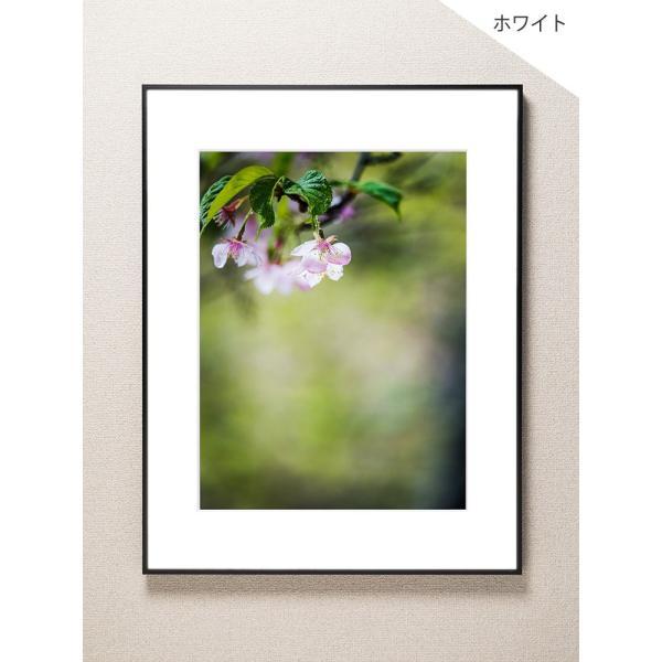 【片岡正一郎】オリジナルプリント「桜」No.2 A3額付き|exa-photo|02