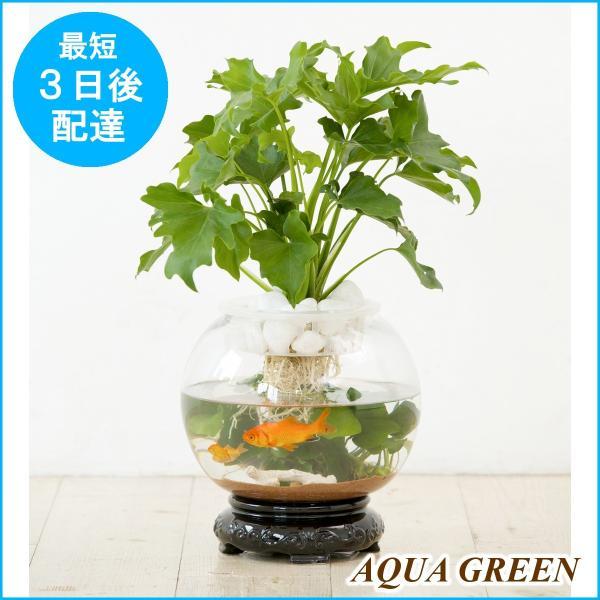 植物・水・光が織りなすAQUA GREEN。観葉植物の水耕栽培をインテリア向けにしたガラスの水槽