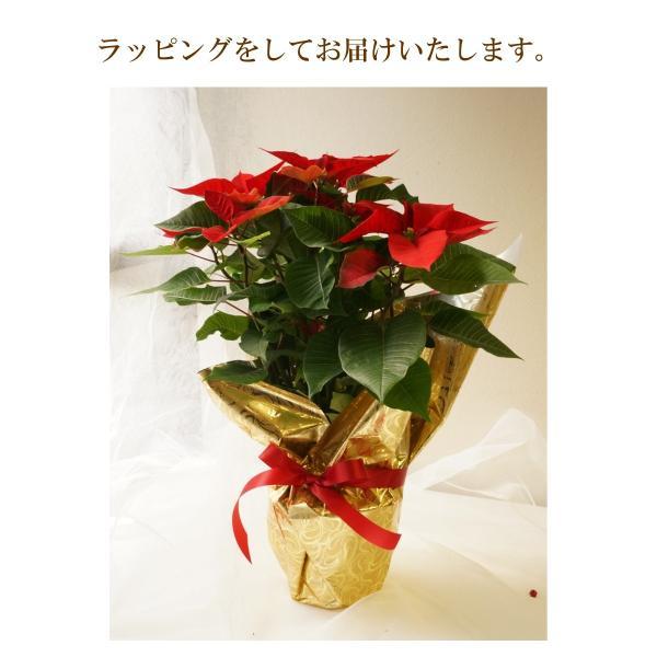 花鉢「ポインセチア 5号鉢」 クリスマス お歳暮 誕生日 お祝い お正月飾り花 花 鉢植え ギフト プレゼント 送料無料|f-hanasyou|04